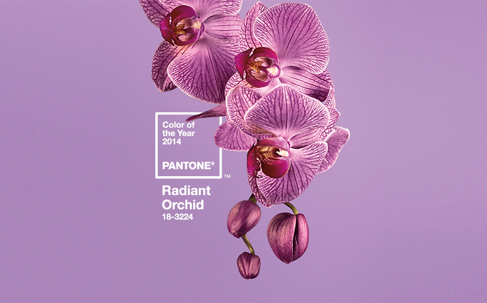 radiant orchid color of year 2014