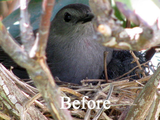 A photo of a bird before enhancement