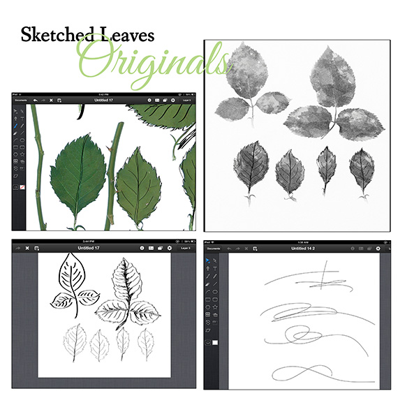 sketched leaves originals