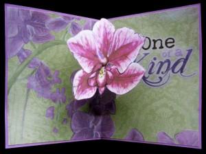 pedestal pop-up orchid