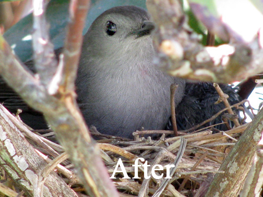 A photo of a bird after it has been brushed with the Dodge tool