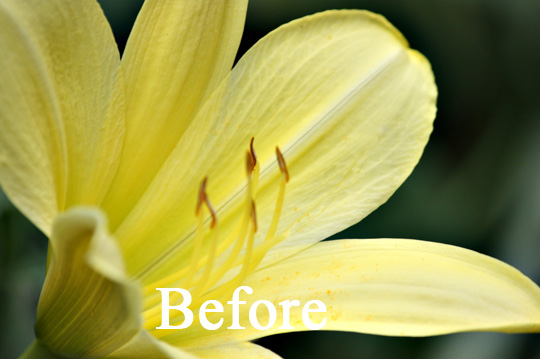 A photo of a flower before it has been enhanced