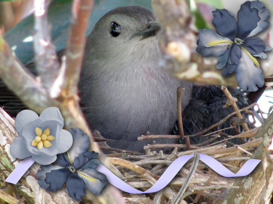 An enhanced photo of a bird with digital scrapbooking embellishments added